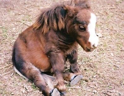 самая маленькая лошадка