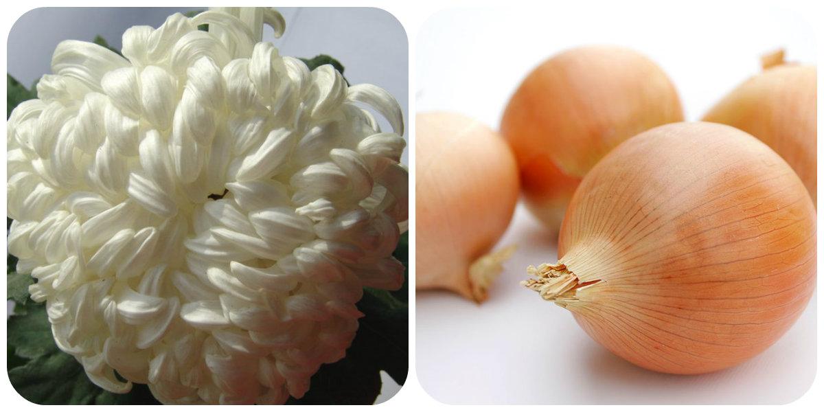 collage лук хризантема